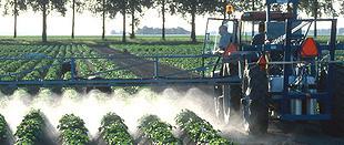 Aardappels spuiten. 80% van de fungiciden in Nederland gaat op aan de Phytophthora