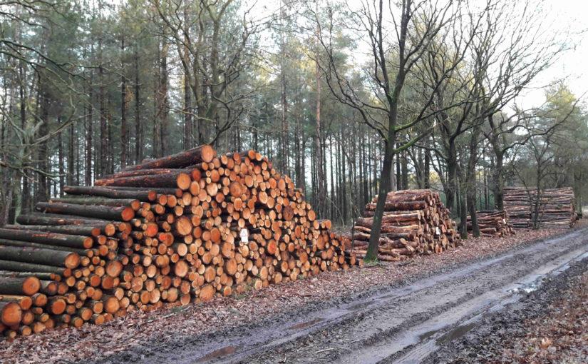 Boswetenschapper: 'Bouwers kunnen het bos juist redden'